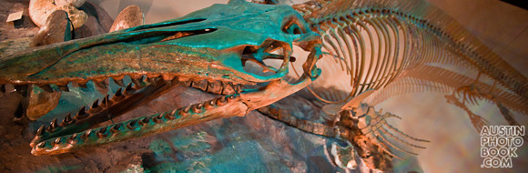 Texas Memorial Museum Dinosaur University of Texas - Onion Creek Mosasaur - Austin, Texas