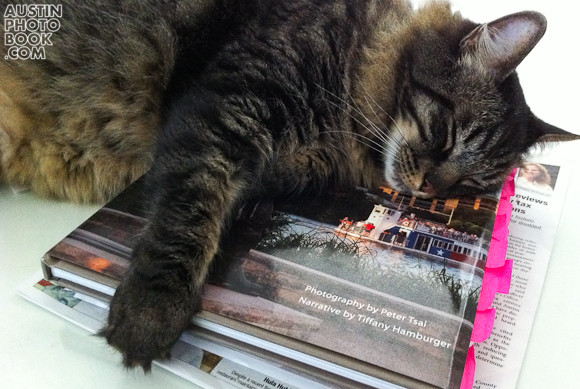 kitties love Austin Photo book AustinPhotoBook.com Thanks Supporters In the News and Social Media